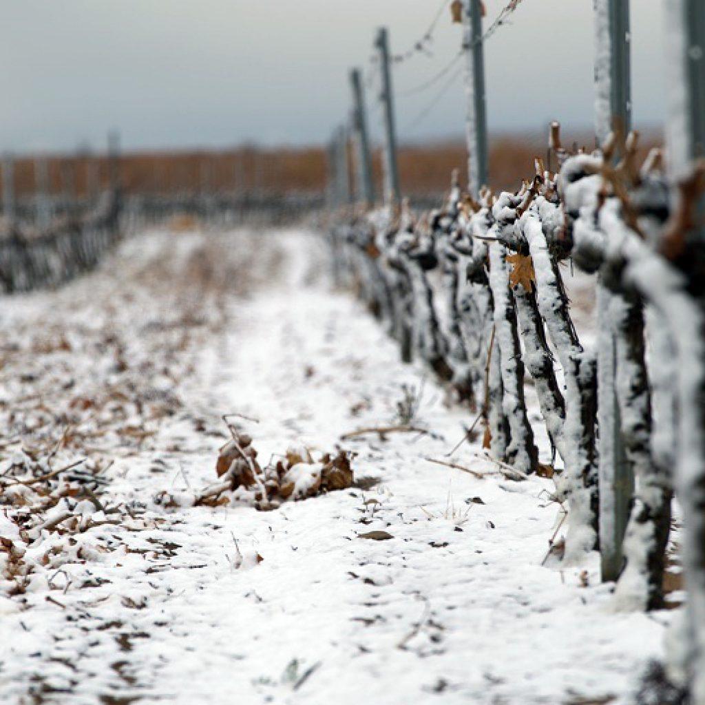 Mario Giribladi vignes sous la neige